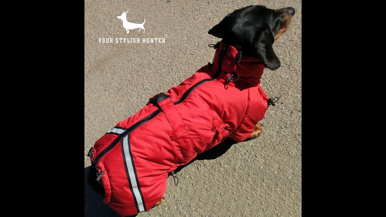 Комбинезон для собаки! Одежда для собак своими руками выкройки .