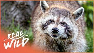 Nature's Most Invasive Species | Species Invasion | Real Wild