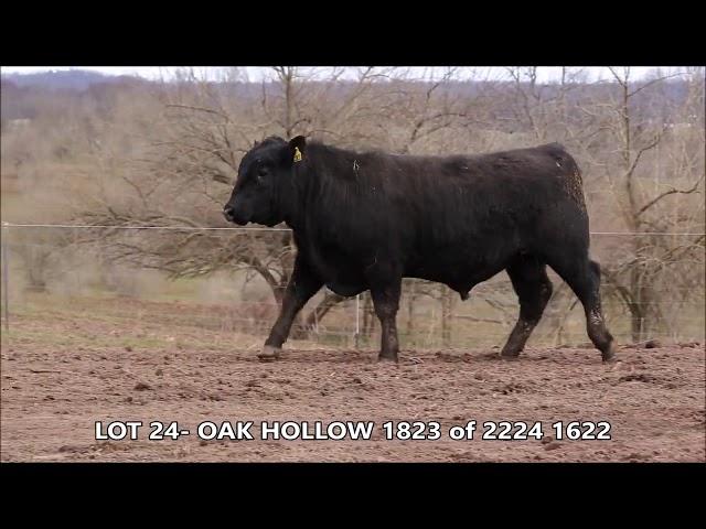 Oak Hollow Lot 24
