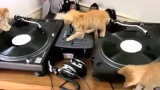 Whose in the House Dj Kitty in the House