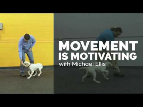 Movement is Motivating