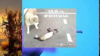 Смешная собака думала что кот умер, зря