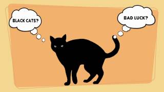 Most popular MYTHS about CATS