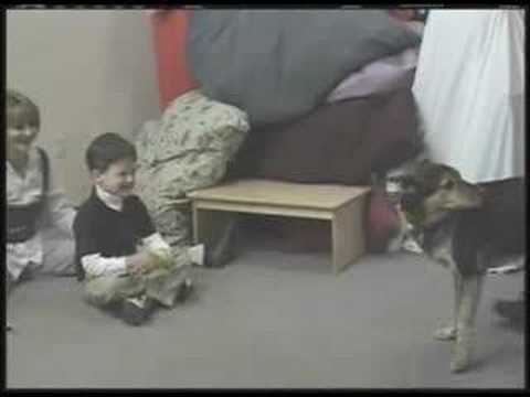 Effects of Animal Assisted Therapy on Autism (Video 2 of 5)