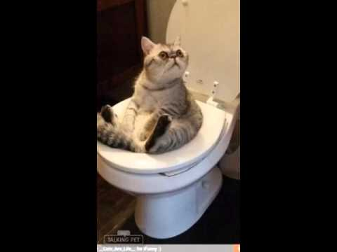 Poor Kitty Stuck On Toilet Youtube