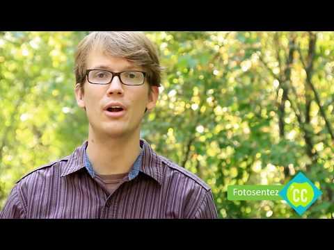 Damarlı Bitkiler Demek Kazanmak Demek! (Biyoloji) (Hızlandırılmış Kurs - Crash Course)