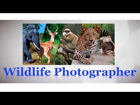 career-as-wildlife-photographer