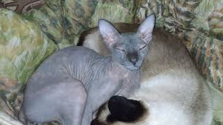 Cats sweet to wash and sleep