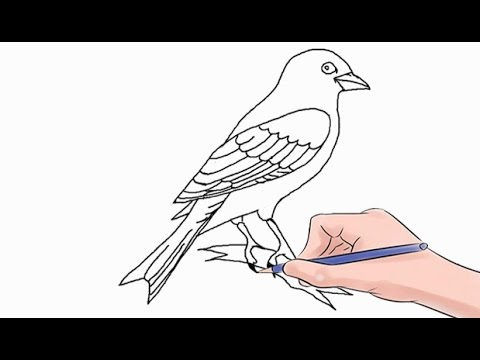 How to Draw a Canary Easy Step by Step
