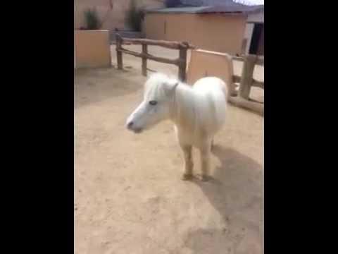 Cute Pony Eating Banana Muz Yiyen Yavru At Youtube