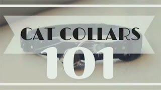 Cat Collars 101