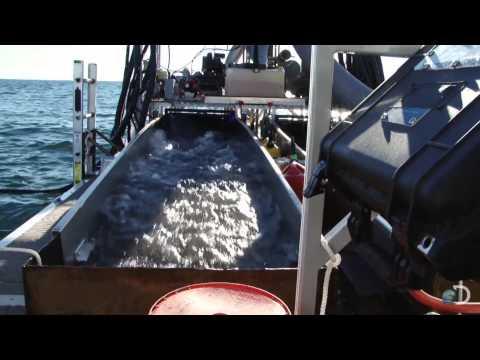 Corn Flake Gold| Bering Sea Gold
