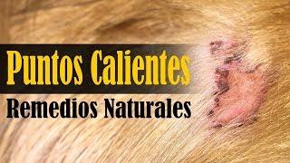 Download lagu Remedios caseros para puntos calientes en perros MP3