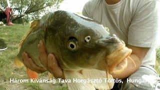 Három Kívánság Tava Horgásztó Töttös, Hungary  2016.08.20.