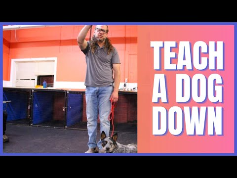 How To Teach a Dog Down  Solid K9 Training (2019)