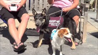 Dugan & Sir Lance Sir Lot Head For The Ocean, Two Pups Looking For A Home