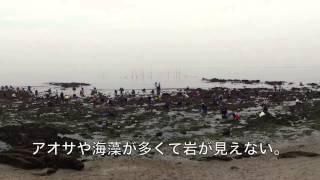 このビデオの情報梶島潮干狩り.