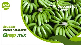 SPN Successful cases, Banana – Ecuador
