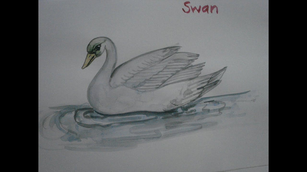 how to paint swan in watercolor youtube