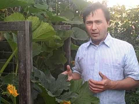 How I Grow a Summer Vegetable Garden and You Can Too