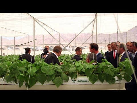 Parched Jordan starts growing vegetables in desert