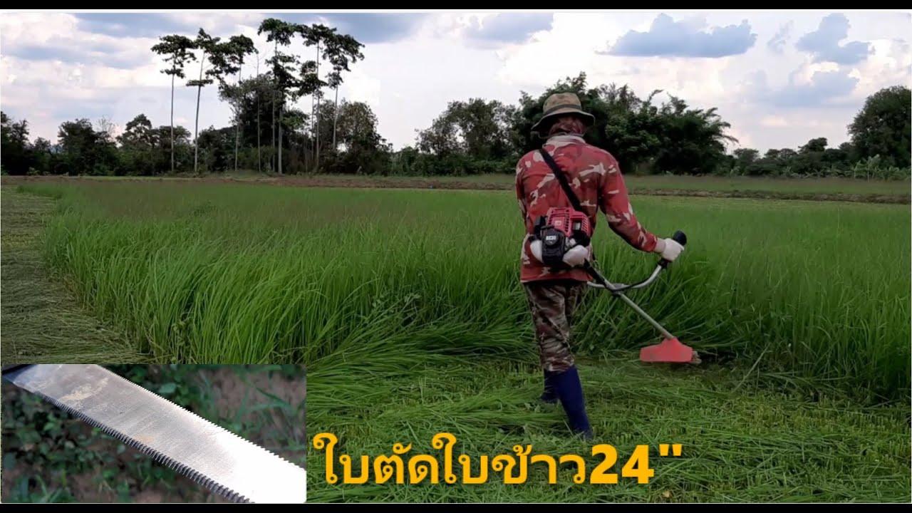 EP3.ชีวิตชาวนา,ตัดใบข้าว,ใช้เครื่องตัดหญ้า,ใบตัดใบข้าว24นิ้ว,เครื่อง4จังหวะ,ปีนี้เฮ็ดนาเด้อพี่น้อง