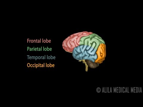 Human Brain Anatomy and Lateralization of Brain Function, 3D Animation.
