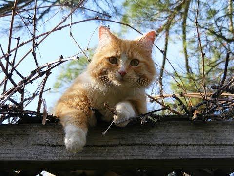 Стихи о кошках 🤗