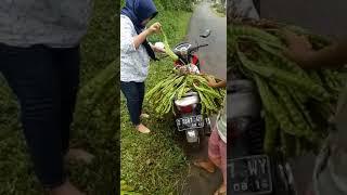 Borong borong Pete 😍😍😜😜 Video