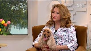 Власниця кокер-спанієлів розповіла усе, що потрібно знати про собак цієї породи