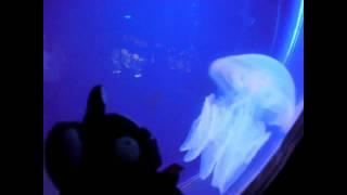 Iso Brown - le ninja et la meduse