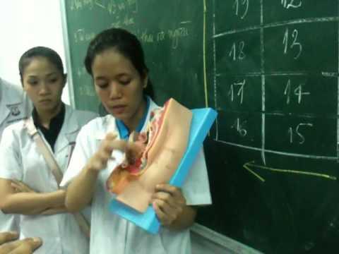 Bài giảng Y học cơ sở 2 - Hệ sinh dục nam