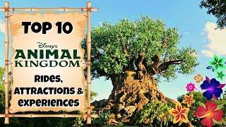 Скачать TOP 10 Animal Kingdom Rides Experiences Walt Disney World 2017
