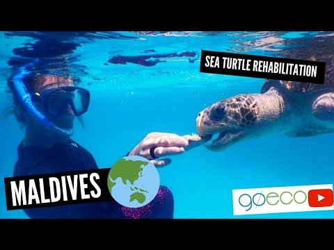 Maldives - Sea Turtle Conservation