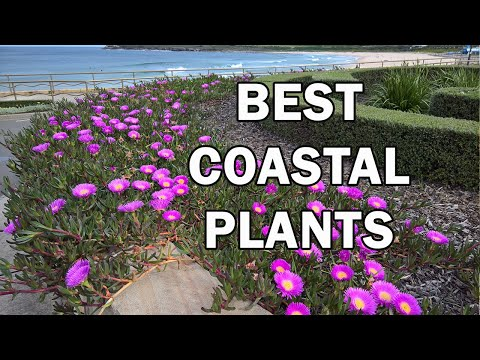 Top 10 Coastal Plants for Salt-Laden Windy Situations - Ozbreed