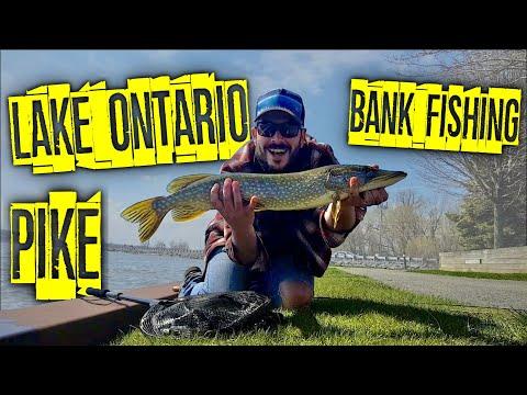 Bank Fishing For Pike In Lake Ontario - Pike Opening Weekend 2020