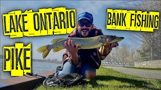 Bank fishing for pike in Lake Ontario - Pike opening weekend 2020