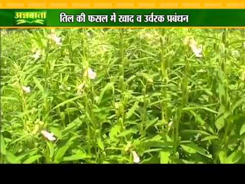 Know about sesame plantation and how to prepare nursery for forestry plants