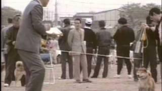 昭和63年4月24日撮影 第12回関東連合展覧会(第74回神奈川支部...