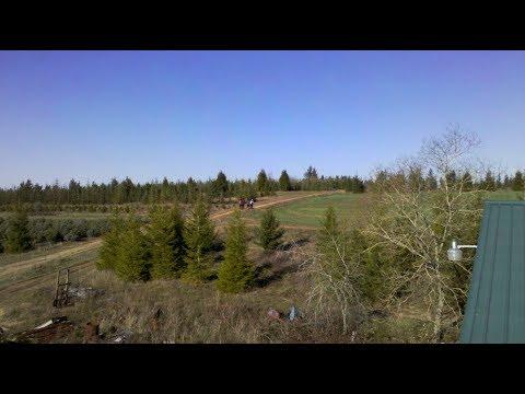 Shriver Farms U-Cut Christmas Tree Farm In Gresham, Oregon - YouTube