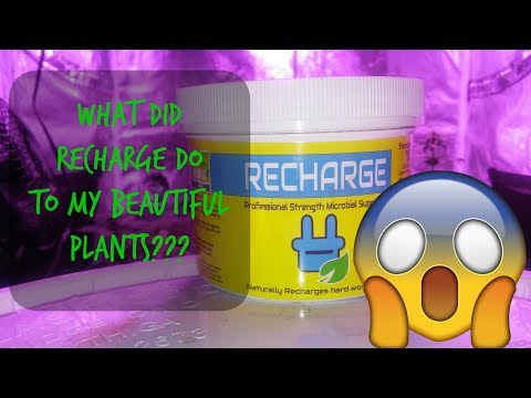 Recharge Microbes 48 Hour Update 😱What Did Recharge Do To My Plants?