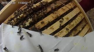 Пчеловодство.Охлаждаем гнездо осенью.