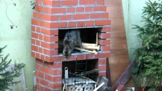 Kocica Burcia na kominie