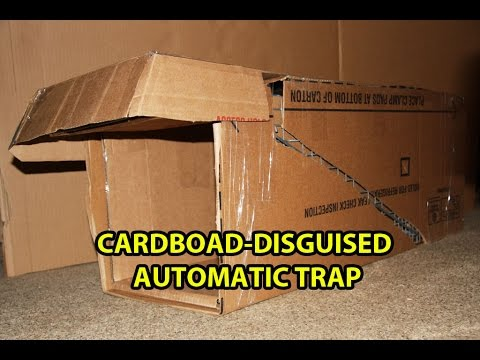 How To Make A Cat Trap Out Of Cardboard