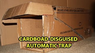 Cardboard-disguised trap will catch a feral cat