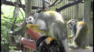 This Summer At Paradise Wildlife Park