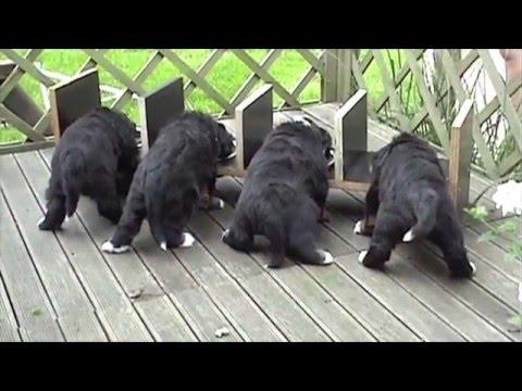 de pups van 't Rebenhof