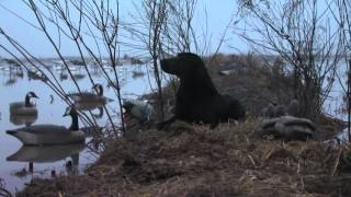 Wintertime Catfish & Sacramento Valley Duck Hunting