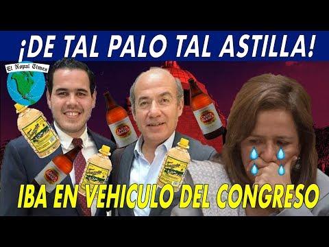 Sobrino de Felipe Calderón es Corrido del Congreso por Manejar hasta las chanclas