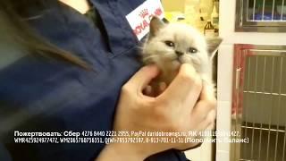 Задыхающегося котенка ветеринары обследуют но диагноз пока не выявили rescue kitten